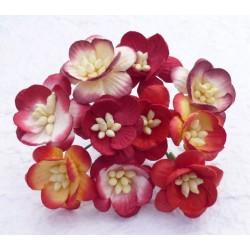 Kwiaty wiśni MIX KOLOR, zestaw 50szt.