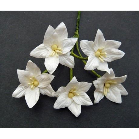 Róże Toskańskie IVORY 35mm, zestaw 5 szt