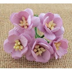 WOC Kwiaty wiśni zestaw 5szt. ECRU